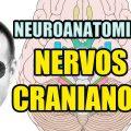 Nervos Cranianos - Sistema Nervoso (Neuroanatomia) - Anatomia Humana - Vídeo Aula 129