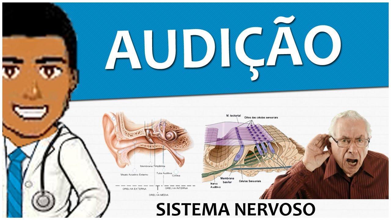 Sistema Nervoso 18 – Anatomia e Fisiologia da audição - Vídeo aula
